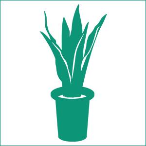 光触媒人工観葉植物